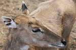 Aviary for deer opened in Zelenograd